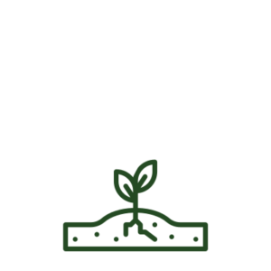 plant growing icon